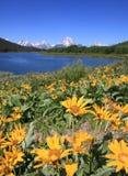降低秋天,黄石国家公园 免版税库存图片