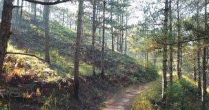 降低通过早晨神秘的森林恐怖概念森林hellowen 神仙的surise在狂放的森林和飞行里 股票录像