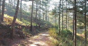 降低通过早晨神秘的森林恐怖概念森林hellowen 神仙的surise在狂放的森林和飞行里 影视素材