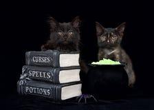 降咒语的万圣夜小猫 免版税库存图片