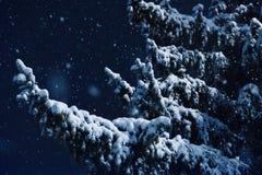 降雪、飞行的一棵圣诞树的雪花、分支在用树冰盖的城市公园和雪 库存照片