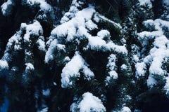 降雪、飞行的一棵圣诞树的雪花、分支在用树冰盖的城市公园和雪 库存图片