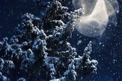 降雪、飞行的一棵圣诞树的雪花、分支在用树冰盖的城市公园和雪 免版税库存照片
