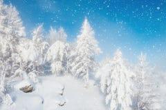 降雪和积雪的树在山 库存图片