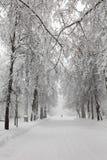 降雪在公园,多雪的冬天路,积雪的树环境美化 恶劣天气概念 库存图片