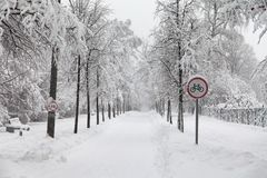 降雪在公园,多雪的冬天路,自行车标志,积雪的树风景 恶劣天气概念 免版税图库摄影