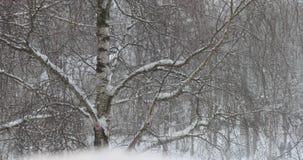 降雪在冬天公园 静态射击 股票录像