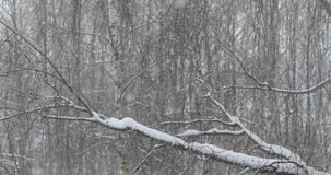 降雪在冬天公园 静态射击 影视素材