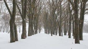 降雪在冬天公园 股票视频