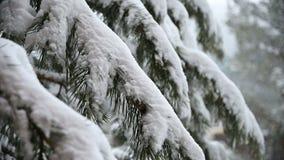 降雪在冬天在与落的雪的一具球果森林软的多雪的圣诞节早晨在慢动作 ?? 股票录像