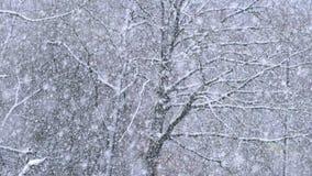 降雪在冬天森林里 股票视频
