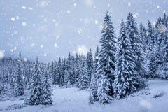 降雪在冬天森林里 免版税库存图片