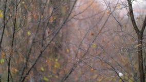 降雪在反对退色的树的秋天 影视素材