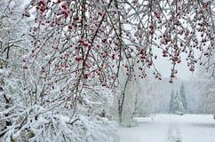 降雪在城市公园冬天背景中 免版税库存照片