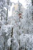 降雪在城市 免版税库存图片