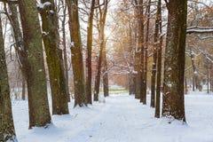 降雪在早期的冬天,凯瑟琳公园,普希金 免版税库存图片