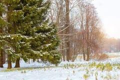 降雪在早期的冬天,凯瑟琳公园,普希金 库存图片