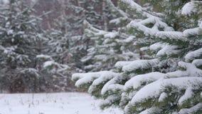 降雪在森林里 股票视频