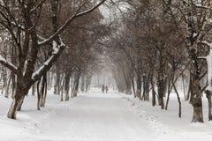 降雪在11月 免版税库存图片