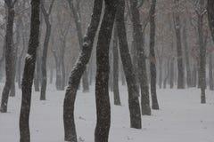 降雪的天 库存照片