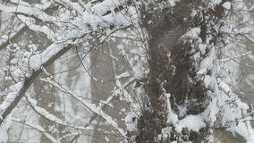 降雪的树和植被 影视素材