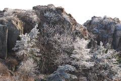 降雪的树在冬天 免版税库存图片