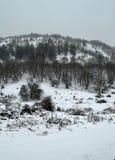 降雪的森林 免版税库存图片