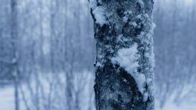降雪的森林 股票录像