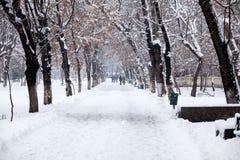 降雪的风景在公园 免版税库存照片