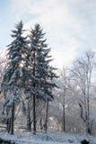 降雪的风景在公园 库存照片