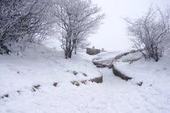 降雪的登上黄山在中国 图库摄影