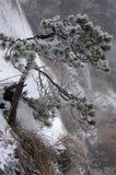 降雪的登上黄山在中国 库存图片