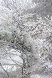 降雪的登上黄山在中国 免版税图库摄影