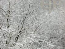 降雪,在雪的树 免版税库存图片