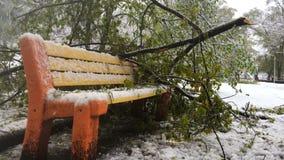 降雪,树在一条长凳落在公园 股票视频