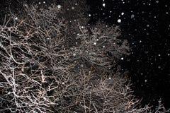 降雪,雪剥落,冬天树,分支在晚上包括雪 库存图片