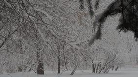 降雪 影视素材