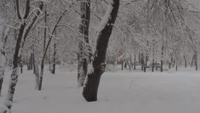 降雪 股票视频
