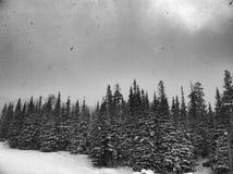 降雪 免版税图库摄影