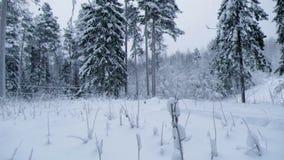 降雪 33c 1月横向俄国温度ural冬天 影视素材