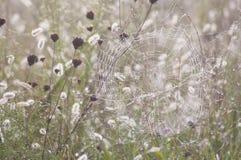 在早晨的露水的蜘蛛网。 免版税库存照片
