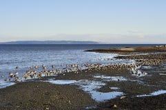 限定范围海湾地区公园海滩  库存图片