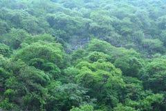 陡峭的中美洲密林风景 免版税库存图片