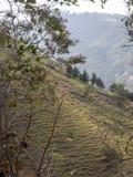 陡峭的小山在萨尔瓦多 免版税库存图片