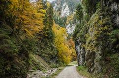 陡峭的岩石墙壁和秋天颜色在Zarnestiului狼吞虎咽 库存图片