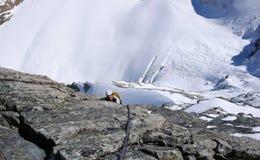 陡峭的岩石攀登的登山者远高于巨型冰川 库存图片