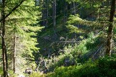 陡峭的森林 免版税库存照片