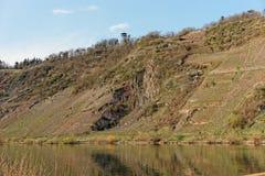 陡峭的葡萄园倾斜在Punderich 免版税库存照片