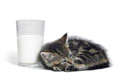 除一杯的小猫牛奶以外 库存照片