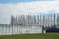 除一片绿色草原以外的温室和在backg的高树 免版税库存图片